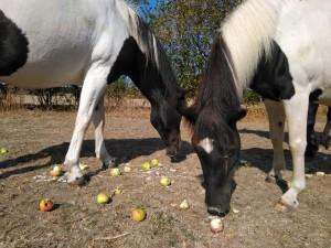 Pferde-Gut-Weidensee01